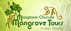 manglares-churute-mangrove-tours, South America, Ecuador, Guayas, Manglares Churute, mangrove, tours, boat, birds, bird watching, hike, kayak, sustainable, guayaquil, day trip